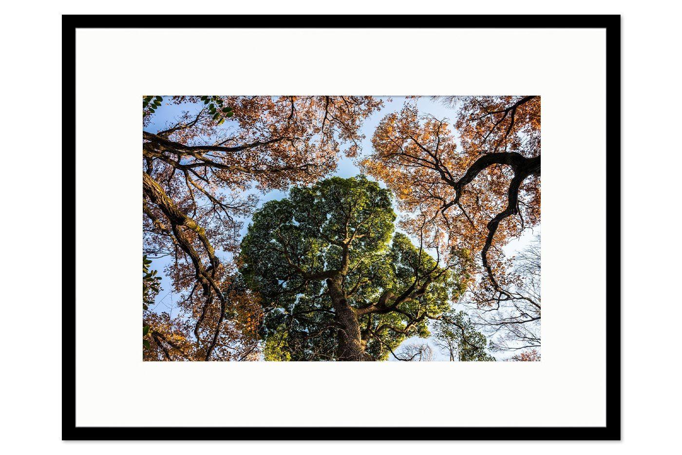 Cadre galerie Tokyo Trees