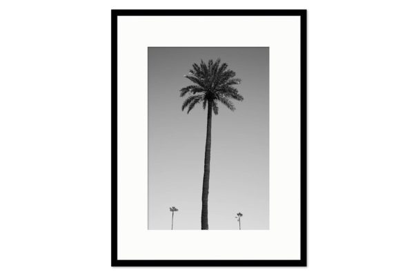 Gallery frame Three palm trees
