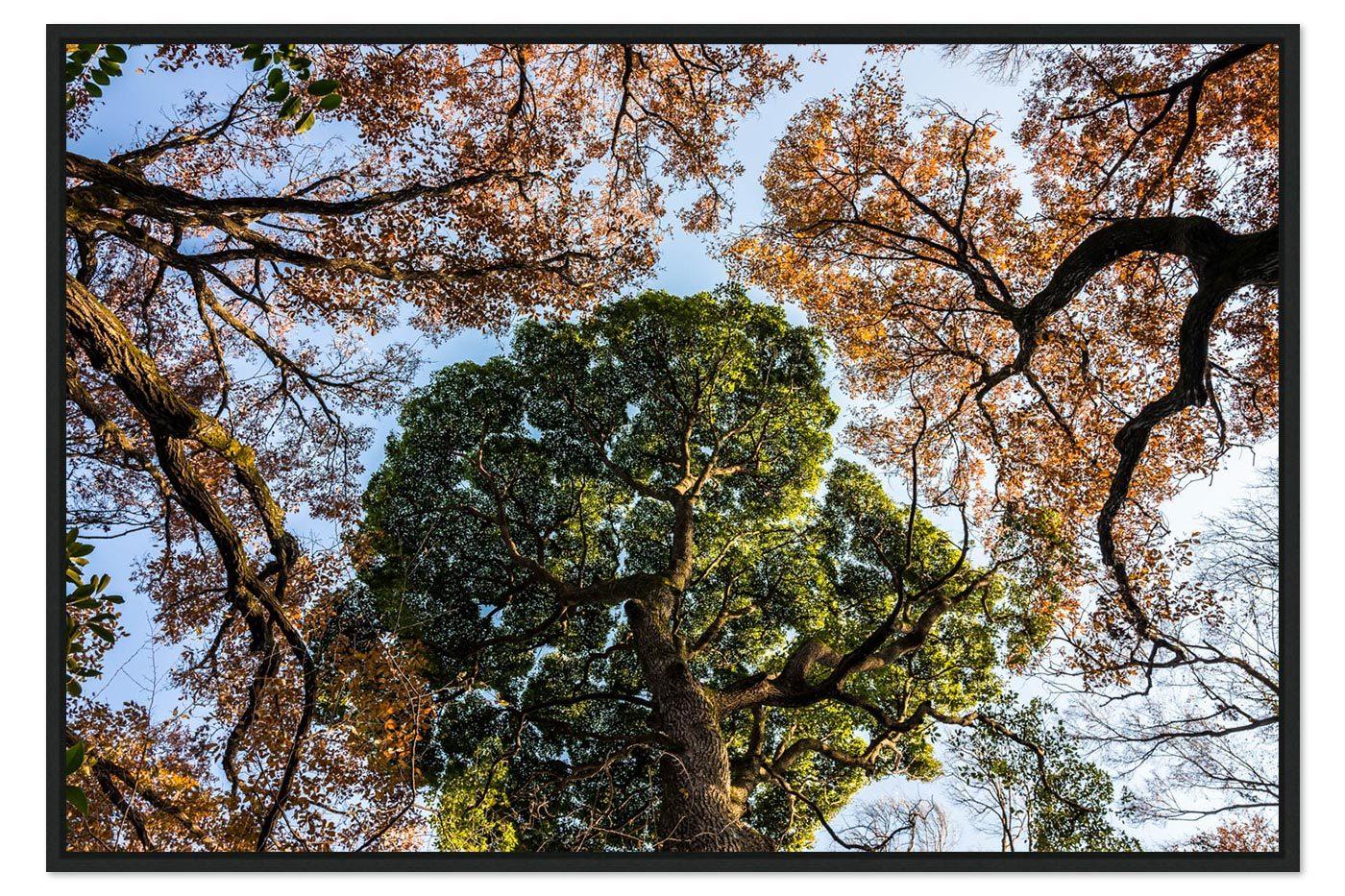 Caisse americaine Tokyo Trees