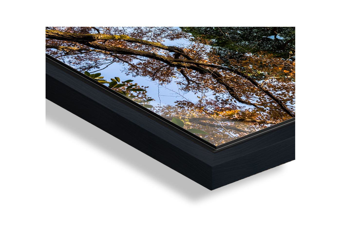 Profil caisse americaine Tokyo Trees