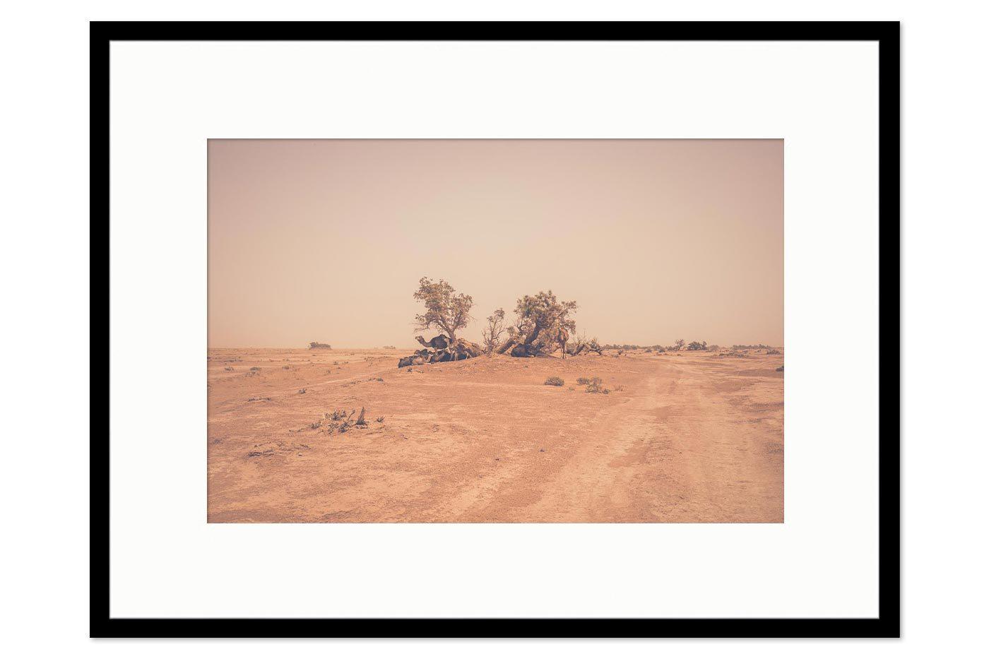 Cadre galerie Camels Desert