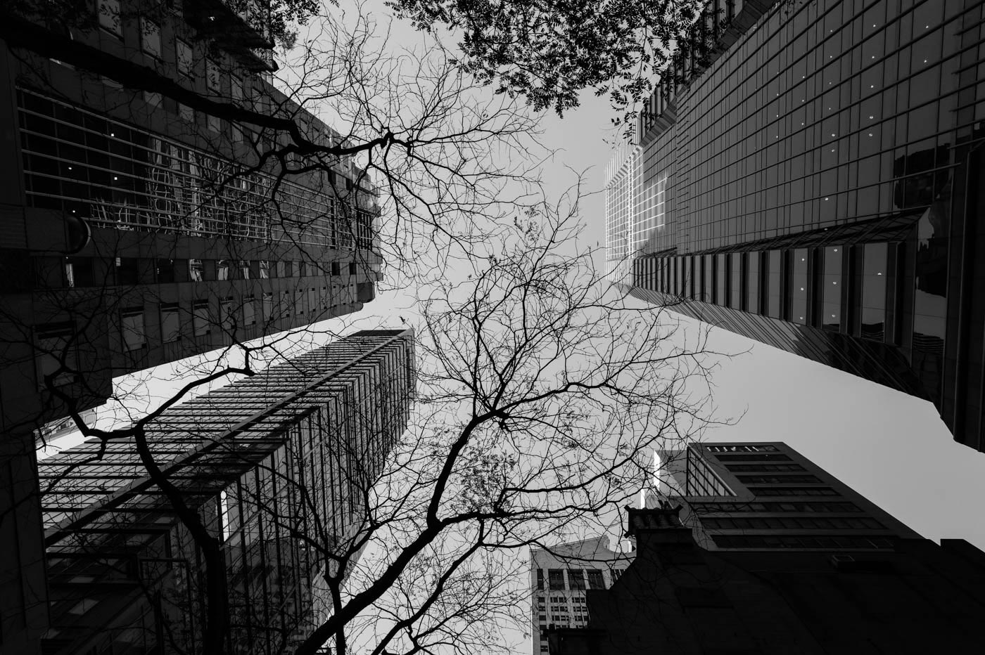 Buildings Trees