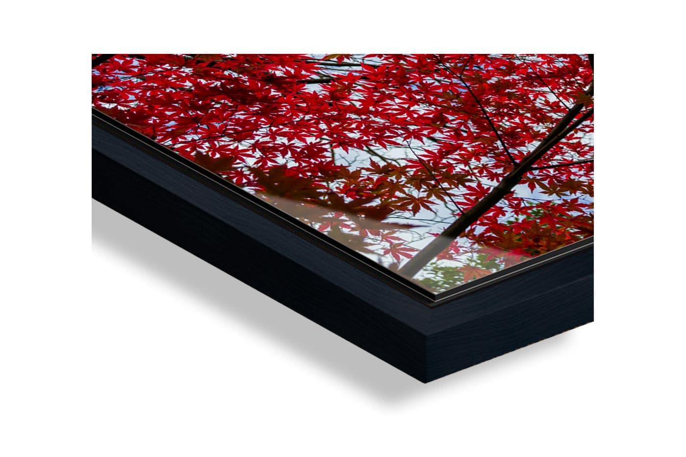 Profil caisse americaine Small red tree leaves